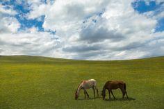 Bliss - Meadows Karachay-Cherkessia