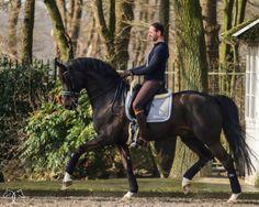 "ilovelaica:   Christ  (Competent x Picard), *2005 hannovarian stallion, in training under Eyal Zlatin.   someone named their horse""christ"""