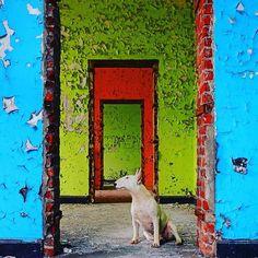 Colours are brighter when the mind is open #urbex #furbex #alicevankempen #urbexbullterrier #clairethebullterrier #bullterrier #bullterriers #URBXTREME