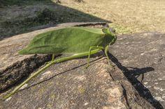 Wandelndes Blatt Outdoor Blanket, Santa Cruz, Bolivia, National Forest, Traveling