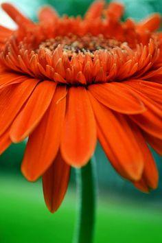 Orange! Pinned by Ignite Design & Advertising, Inc. clickandcombust.com.