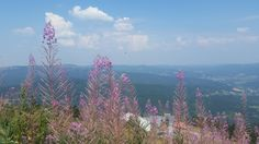 Grosser Arber (360 view over the Bavarian and Bohemian forest, hiking trails, cable car) - Bayerisch Eisenstein, Germany