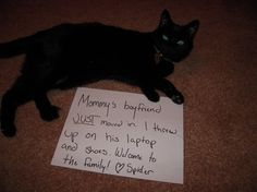"""Why I love cat-shaming: the cats are never ashamed. In fact, this one is proud of his behavior."""