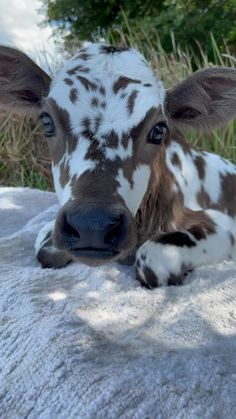 Pretty Animals, Cute Little Animals, Cute Funny Animals, Animals Beautiful, Cute Dogs, Cow Pictures, Baby Animals Pictures, Cute Animal Pictures, Baby Farm Animals