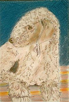 Bedlington Terrier - The Lamb Dog, painting by artist Sandra Merwin
