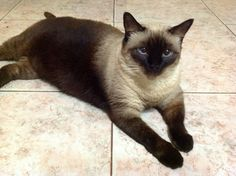 "My cat ""La Niña"", now is part of Pinterest...so smart and funny..."