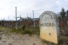 De wijngaarden van Mercier in Epernay, Frankrijk.