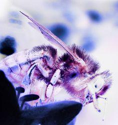 bee 4 by mark buck, via Flickr