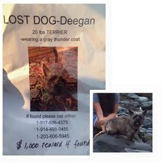 Jolie SuchinCT Lost Pets July 6 ·    Deegan is still missing. Please help us find him. He was last seen running down Hillside Ave. towards Woodmont in Milford Connecticut on the night of the Fourth of July. Family is devastated.