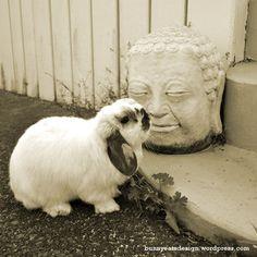 Tofu bunny and buddha  Bunny Eats Design