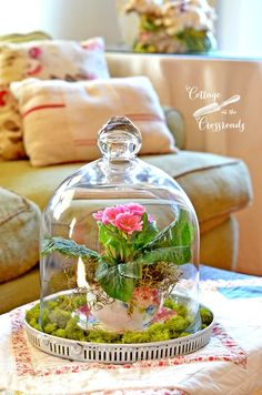 Spring Under Glass at Cottage at the Crossroads