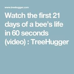 Watch the first 21 days of a bee's life in 60 seconds (video) : TreeHugger