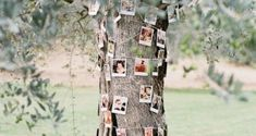 How to Throw A Great Gender Reveal Party: Ultimate Guide for Planning A Gender Reveal party - Дизайн дома Green Wedding, Chic Wedding, Floral Wedding, Perfect Wedding, Wedding Ideas, Wedding Blog, Wedding Ceremony, Rustic Wedding, Wedding Gowns