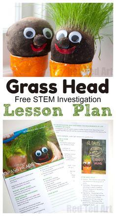Grass Head Lesson Plans - Free STEM Investigation Lesson Plan for teachers #lessonplans #teachers #grassheads #spring