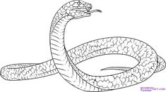 79c402e4e70f44f2742adb0952070bed sins black mamba?b=t 98 best drawing snake study images exotic animals, reptiles