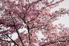 The Cherry Blossom wall art is modern, eclectic photographs printed on sleek acrylic that are appear to float – like magic – above their invisible mounts. The images become three-dimensional and hyperreal, as if you were looking out of a window rather than at a flat work of art. Free Shipping in the USA. Ships within 10 business days of placing order. Lex  Available in different sizes.