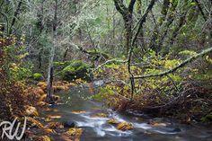 Corte Madera Creek Watershed in Fall, Marin County, California New blog…