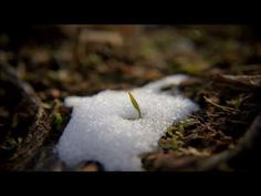 Zachary Bruno - Before the Rain (Nature Music Video) - YouTube