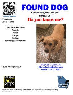 Found Dog - Labrador Retriever - Cartersville, GA, United States