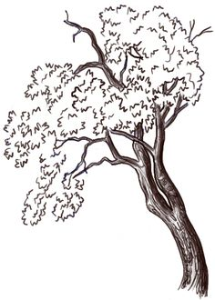 If you want to learn to draw trees, here is a drawing tutorial that you will like. Today we will show you how to draw an oak tree with easy to follow steps. Using basic shapes, we will guide you to drawing a great oak tree. Find out in the following step by step drawing lesson.