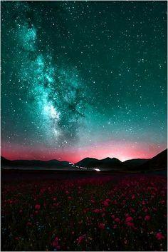 night sky-mountains-flower field