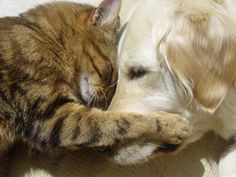 20 Cats and Dogs Hugging it Out  www.buzzfeed.com/...