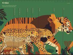Crazy about Cats - Owen Davey Illustration Gato Grande, Amur Leopard, Cat Species, Animal Graphic, Animal Facts, Cat Design, Design Art, Graphic Design, Fauna