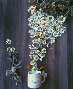 Daisy / Papatya / Gänseblümchen.