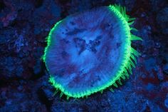 Neon sea creatures have been captured lighting up the ocean with their vibrant colors – in what looked like a scene from Avatar. Photographer Simon Pierce took… Save Our Oceans, Underwater Creatures, Photoshop, Underwater Photography, Deep Sea, Sea Creatures, Vibrant Colors, Scene, Neon