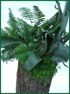 Houseplant Fern Container Garden DIY project in a Tall Wood Pot with recipe / Pike Nurseries