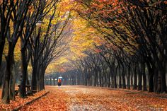 Memory of last autumn by Tiger Seo