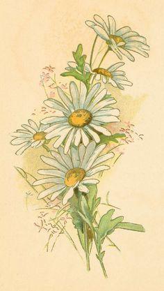 Daisies.jpg (904×1600)