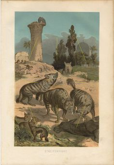 HYENAS Wild Hounds Antique Chromolithograph Print Jungle Wildlife Scene Years Old Matted Ready to Frame Beautiful Color Antique Prints, Vintage Prints, Striped Hyena, Paper Doll Costume, Animal Art Prints, Hanging Art, Vintage Walls, Decoration, Wildlife