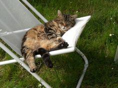 Relax anche per questo gattino... Casa per le vacanze in Francia