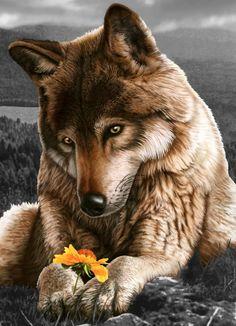 Flower Wolf.