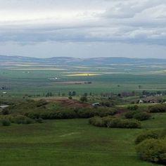 Camas Prairie, Grangeville, Idaho