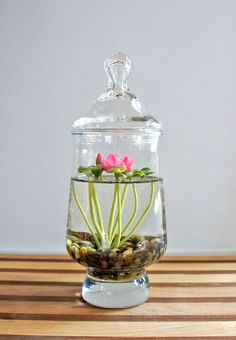 Water Terrarium. Indoor plants and cactus. An assortment of different house plants and foliage. Green rooms and rooms with plants. #cactusindoor