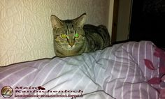 Kaninchenfan Lucky - Mein Kaninchenloch: Schnucki woke up for one hour and bit me into my leg (~_~) a lovely method to say, i am hungry, but i love him (^_~)   #cats #katzen #neko #chat #kitty #miezekatze #pets #haustiere   kaninchenfanlucky-meinkaninchenloch.blogspot.de/2015/02/schnucki-woke-up-for-one-hour-and-bit.html