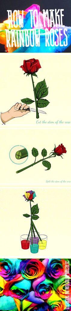 How to make rainbow roses - NaturalGardenIdeas.com   Natural garden ...