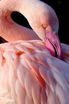 Flamingoby*s-kmp
