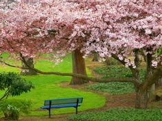 Cherry Tree, Evergreen Park, Bremerton.... Just 4 miles from Cottage Bay!