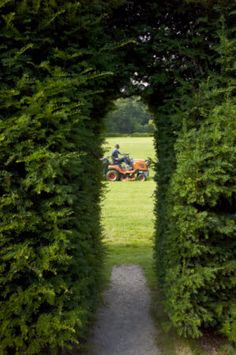 Gardener mowing the Great Lawn grass at Powis Castle and Garden, Powys, in August.