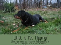 What is Pet Flipping, and Why is it Important?