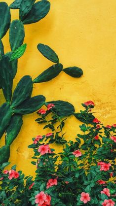 Modern wallpaper: Sunshine damask by Lulu DK, from Elle Deco Aesthetic Iphone Wallpaper, Aesthetic Wallpapers, Lock Screen Wallpaper Iphone, Phone Backgrounds, Wallpaper Backgrounds, Paper Cactus, Image Deco, Nature Aesthetic, Mexican Art