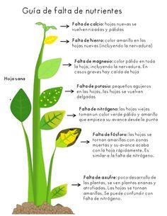 Guía de falta de nutrientes en una planta | Tv Agro en Facebook