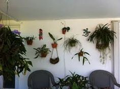Image result for orchid wall garden