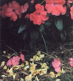 Yoshihiko Ueda Bouquet, Contemporary Photography, Photographers, Bloom, Japan, Game, Flowers, Plants, Pictures