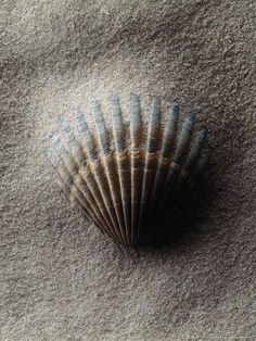 Sea Life & Sea Creatures Art, Prints, Paintings & Wall Art for Sale Hermit Crab Homes, Coffee And Cigarettes, Scallop Shells, Art For Sale Online, Sea Creatures, Sea Shells, Conch Shells, Beautiful Things, Nice Things