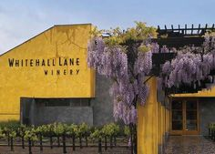 Whitehall Lane winery - Napa Valley - This was a neat place to visit in the summer just before harvest because you could get up close to the vines.  I loved the building and the wines were great.
