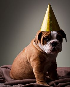 Bulldogs Birthday